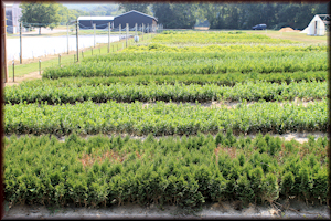 Bed Grown Liners in Belvidere, TN
